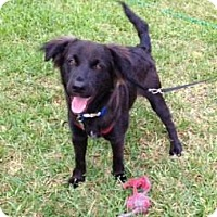 Adopt A Pet :: Jeffie-Key West - Homestead, FL