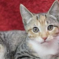Adopt A Pet :: Edie K - Raleigh, NC