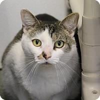 Adopt A Pet :: Pup - Greensboro, NC