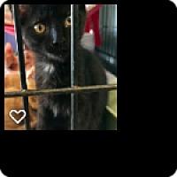 Adopt A Pet :: Sprout - Fallbrook, CA