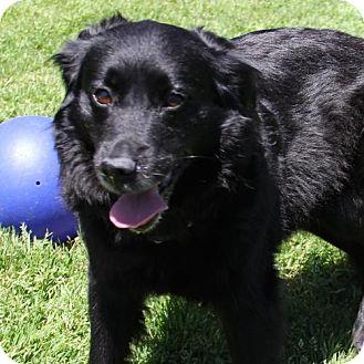 Labrador Retriever Mix Dog for adoption in Waynesville, North Carolina - Jasmine