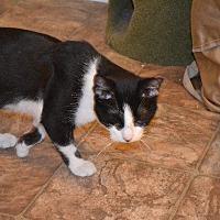 Adopt A Pet :: Hoover Camper - Cambridge, MD