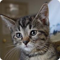 Adopt A Pet :: Ottawa - Greenfield, IN