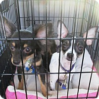 Adopt A Pet :: Julie and Hercules - Shawnee Mission, KS
