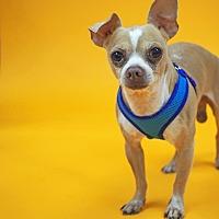 Adopt A Pet :: Stevie - Whitehall, PA