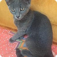 Adopt A Pet :: Loti - Encinitas, CA