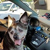 Adopt A Pet :: URGENT NEED! Seniors need help - Snohomish, WA