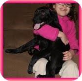 Labrador Retriever/Border Collie Mix Puppy for adoption in Staunton, Virginia - Spice Girl