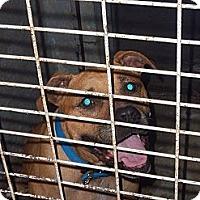 Adopt A Pet :: Carley - Windsor, MO