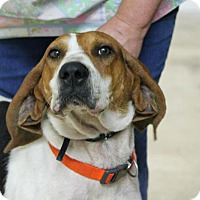 Adopt A Pet :: Benji(Adopted!) - Chicago, IL