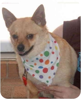 Chihuahua Mix Dog for adoption in LaFayette, Alabama - Rudy