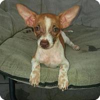 Adopt A Pet :: Bing Bing - Santa Rosa, CA