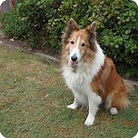 Adopt A Pet :: Copper - Riverside, CA