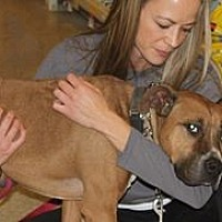Adopt A Pet :: Tucker - Staunton, VA