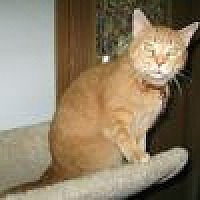 Adopt A Pet :: Hunny - Powell, OH