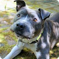 Adopt A Pet :: Johnny Depp - Virginia Beach, VA