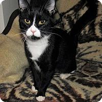 Adopt A Pet :: Tina - Norwich, NY