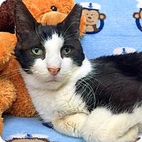 Adopt A Pet :: Miss Squeaky - New York, NY