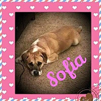 Adopt A Pet :: Sofia ~ ON HOLD - Youngstown, OH