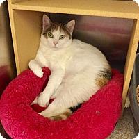 Adopt A Pet :: Cee Cee - Colmar, PA