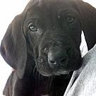 Adopt A Pet :: S Bassadors Sophie