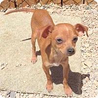 Adopt A Pet :: SPARKLE - Hurricane, UT
