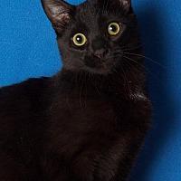 Adopt A Pet :: Mr. Magoo - Gilbert, AZ