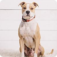 Adopt A Pet :: Bruce - Portland, OR