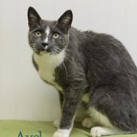 Adopt A Pet :: Axel - West Des Moines, IA