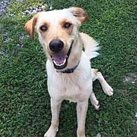 Adopt A Pet :: Mojo Urgent! - Allentown, PA