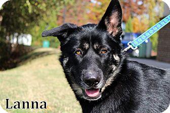 German Shepherd Dog/Husky Mix Dog for adoption in Charlotte, North Carolina - Lanna