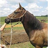 Adopt A Pet :: Dillon - Lyles, TN