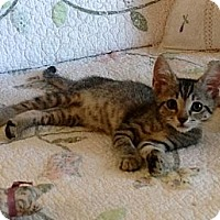 Adopt A Pet :: Sissy and Sassy - Vero Beach, FL