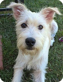 Terrier (Unknown Type, Medium) Mix Dog for adoption in Baton Rouge, Louisiana - Harry
