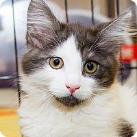 Adopt A Pet :: Kissy - Irvine, CA