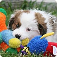 Adopt A Pet :: CLARK - Nampa, ID