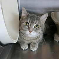 Adopt A Pet :: Itsy - Geneseo, IL