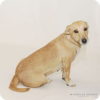 Dachshund/Terrier (Unknown Type, Small) Mix Dog for adoption in Naperville, Illinois - Serenity