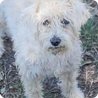 Adopt A Pet :: Eliana - Pipe Creed, TX