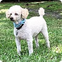 Adopt A Pet :: Kenai - Melbourne, FL