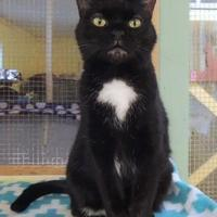 Adopt A Pet :: Minette - Westville, IN