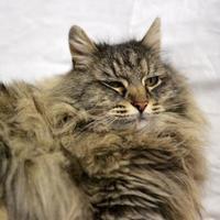 Adopt A Pet :: Wolfie - Redmond, OR