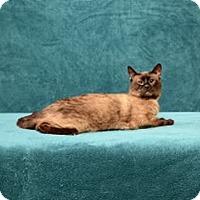 Adopt A Pet :: Gates - Cary, NC