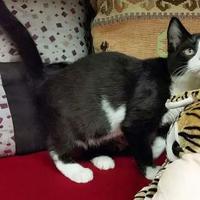 Adopt A Pet :: Sombrero - Canastota, NY