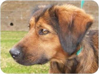 Spaniel (Unknown Type) Mix Dog for adoption in El Cajon, California - Brandy