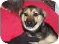 Beagle Mix Dog for adoption in Buckhannon, West Virginia - 2