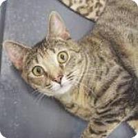 Adopt A Pet :: Marisol - Miami, FL