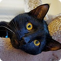 Adopt A Pet :: Billy - Victor, NY