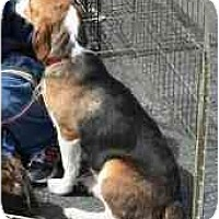Adopt A Pet :: Daffodil - Albuquerque, NM