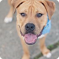 Adopt A Pet :: Romeo - Kingwood, TX